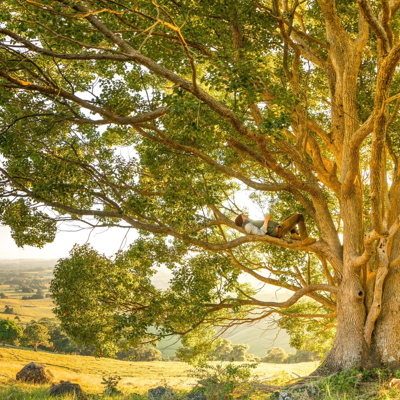 How to Learn Tree Data Structures the Codeless Way