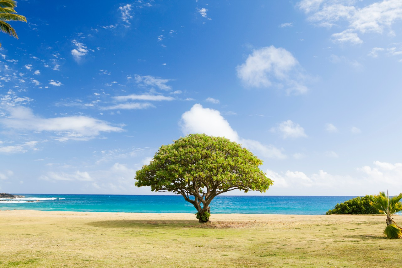 AVL Tree Insertion and Rotation
