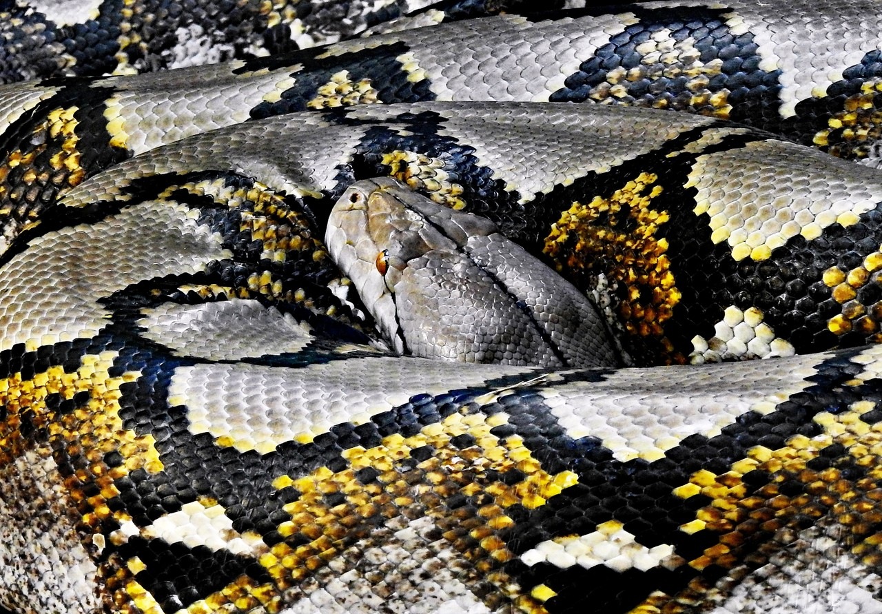 Indentation in Python with Examples