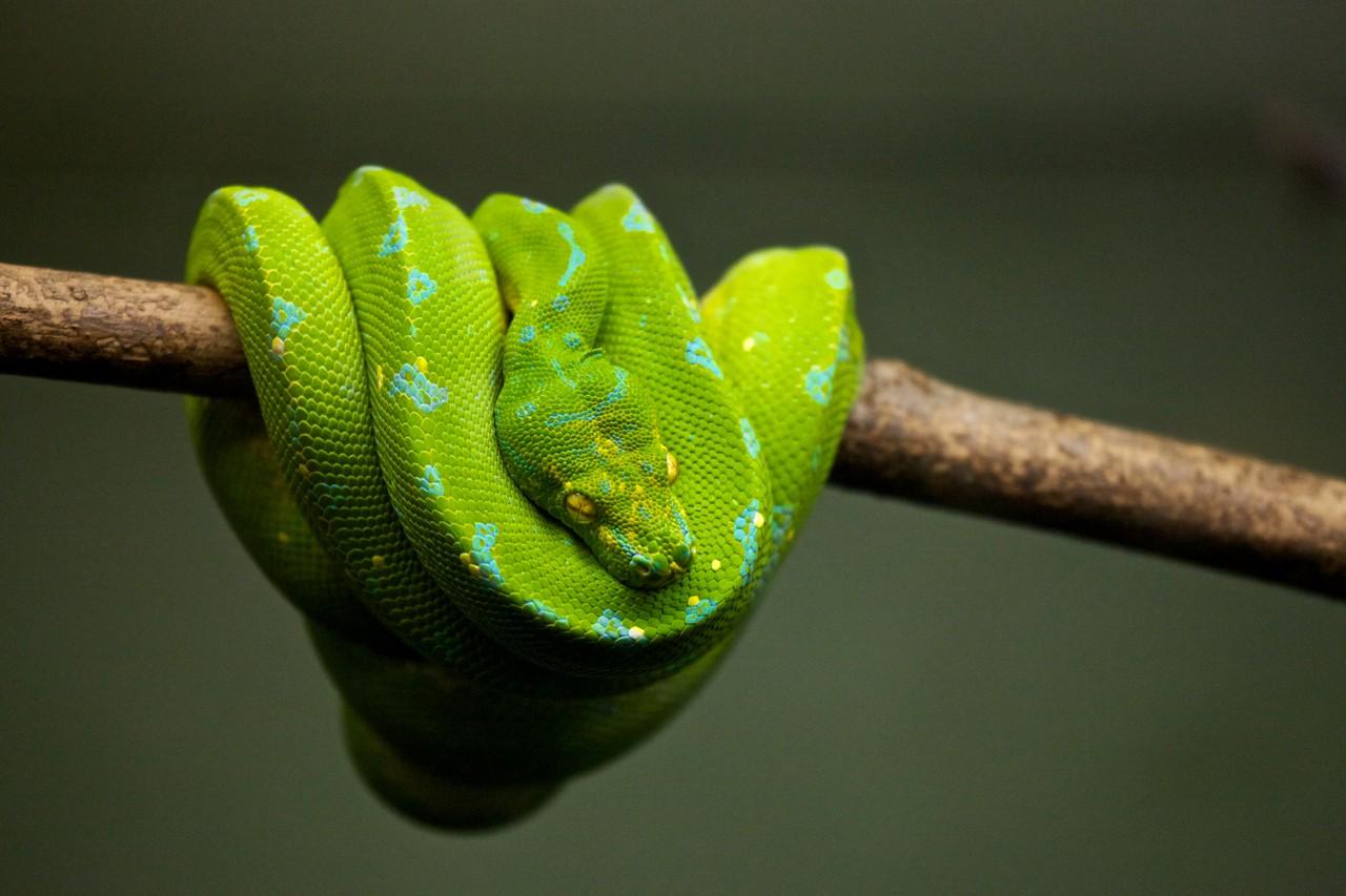 The Best Python Tutorials