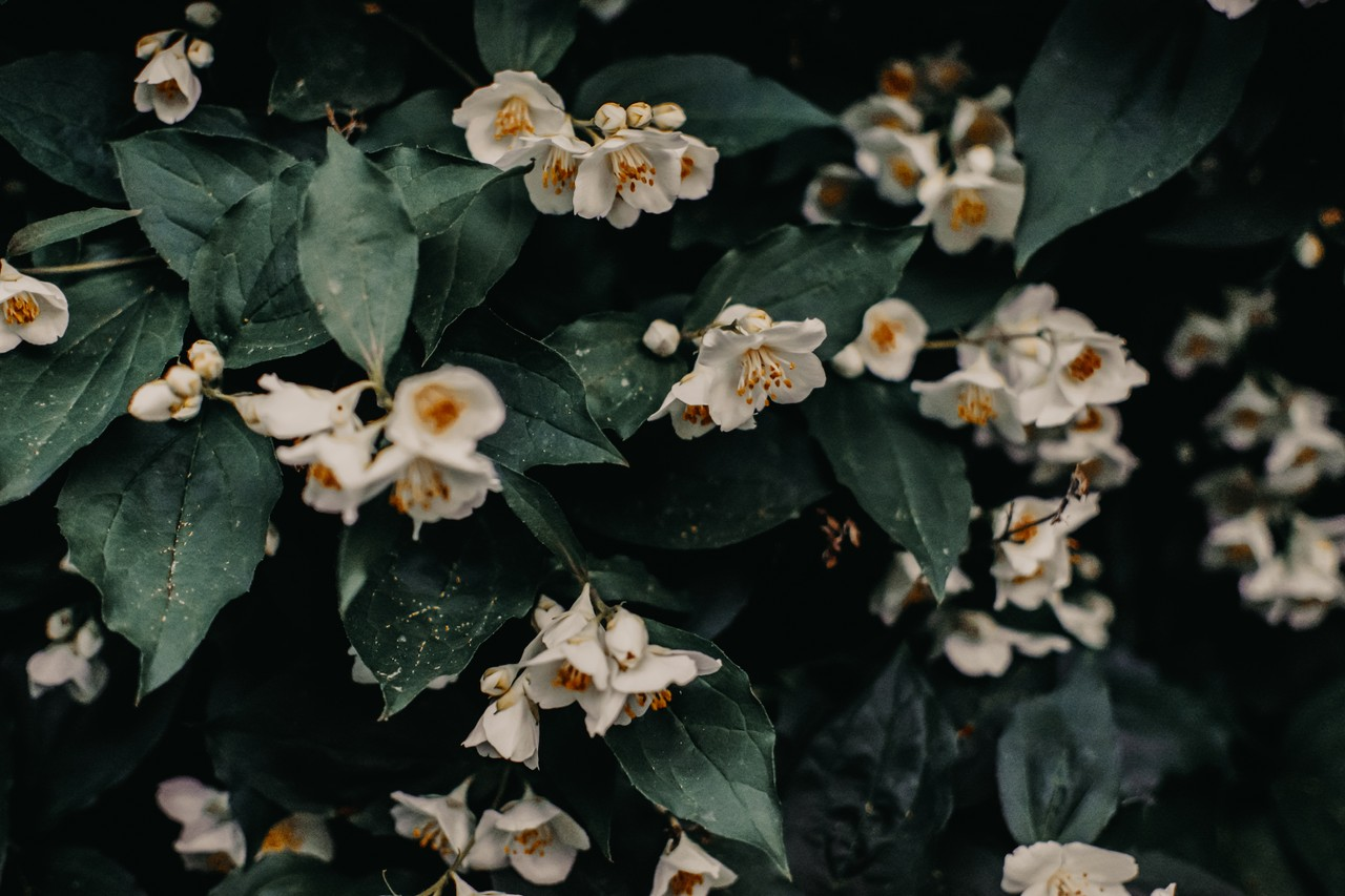 An Introduction to Jasmine Unit Testing
